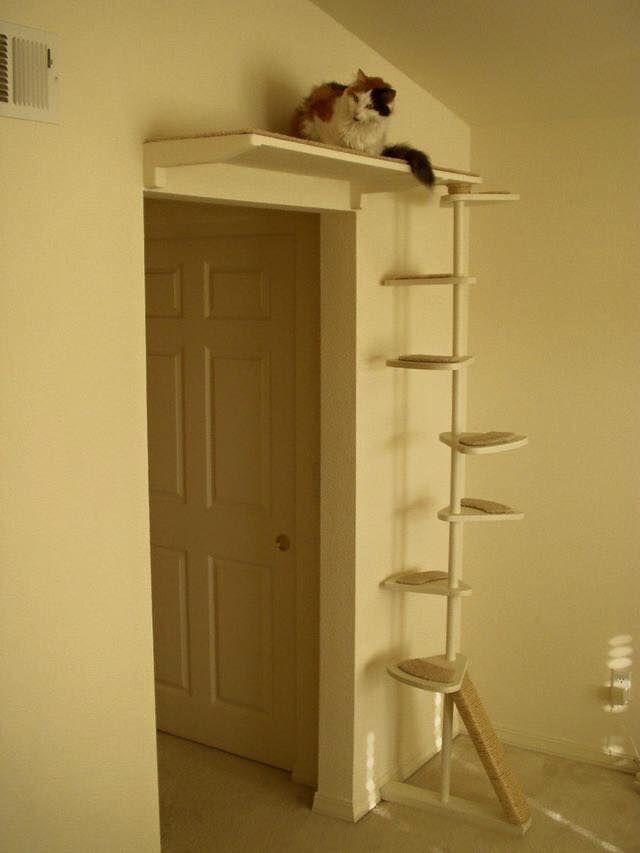 pin von izabela maia auf cats pinterest katzenm bel katzen und katze kletterwand. Black Bedroom Furniture Sets. Home Design Ideas