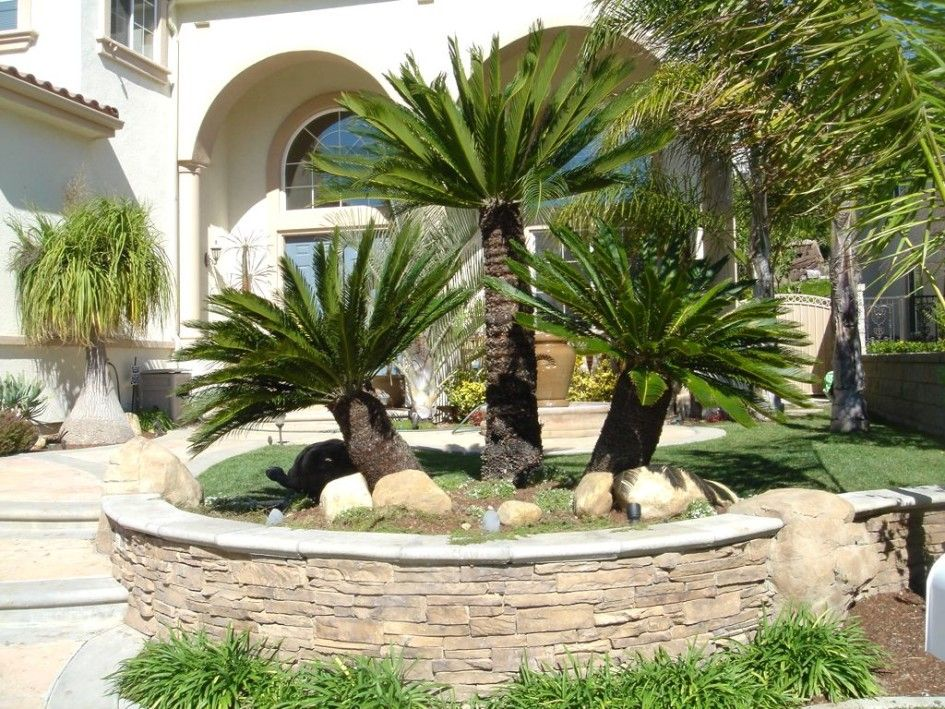 Landscape Raised Plant Bed Garden With Palm Trees For ... on Palm Tree Backyard Ideas id=20591