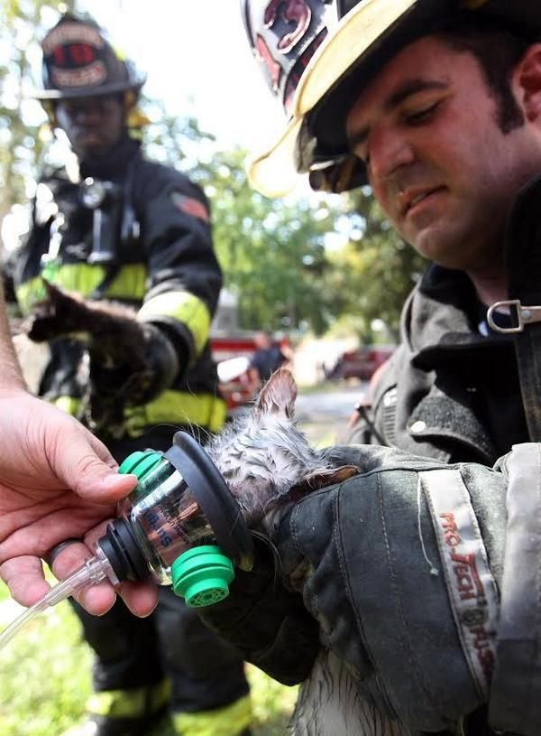 Firefighters revive a kitten after a house fire.