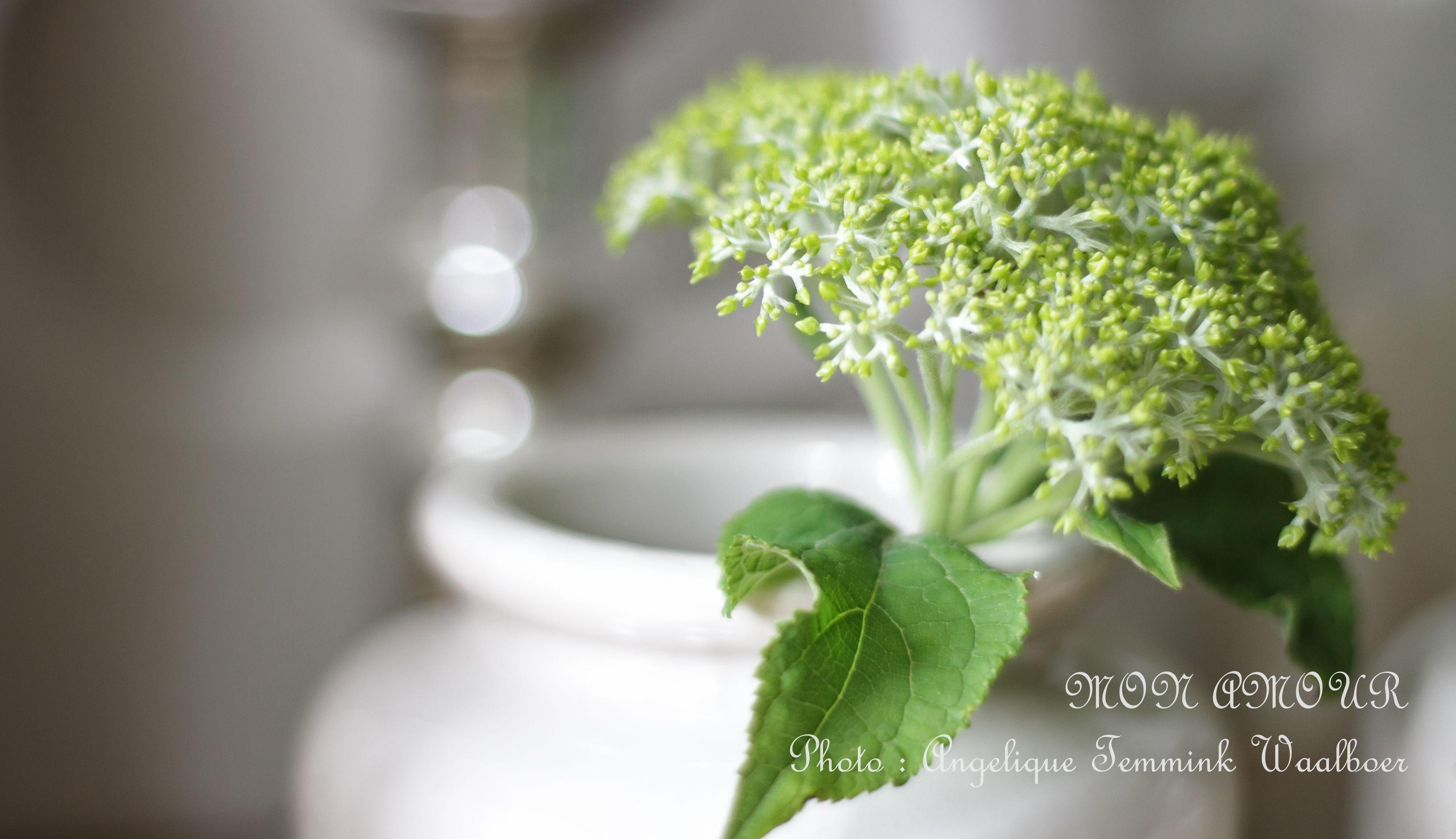 Mon Amour - ' Art de la Fleur ' - Sfeer - Interieur - Fotografie - Decoratie - Styling - Stijlen - Brocante - Frans - Groendecoratie - Bloemen - tuin - Sfeerhoekjes - Angelique Temmink Waalboer.