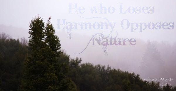 Peace Quote Harmony Nature Bird Nature Quotes Peace Quotes Nature Calendar