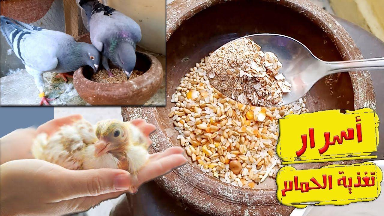 في اي شهر يبدأ الإنتاج عند طيور الزينة طائر الحسون طائر الكناري وبعض طيور الزينة Parrot Birds Bird
