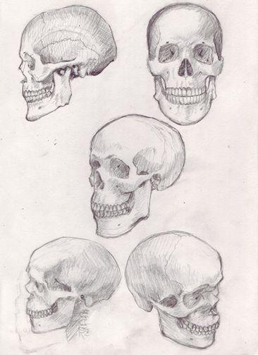How To Draw A Skull 50 Tutorials Drawn In Black Drawings Skull Illustration Skulls Drawing