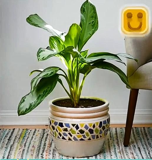 How to bring plants back to life#001