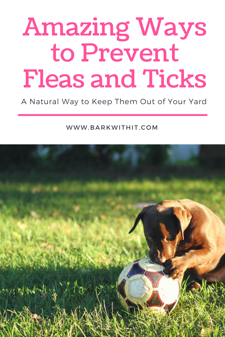 2e83bcf573ca025ab2e041b81bab943b - How To Get Fleas And Ticks Out Of Your Yard