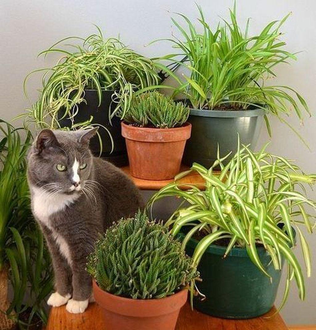 einfache zimmerpflanzen