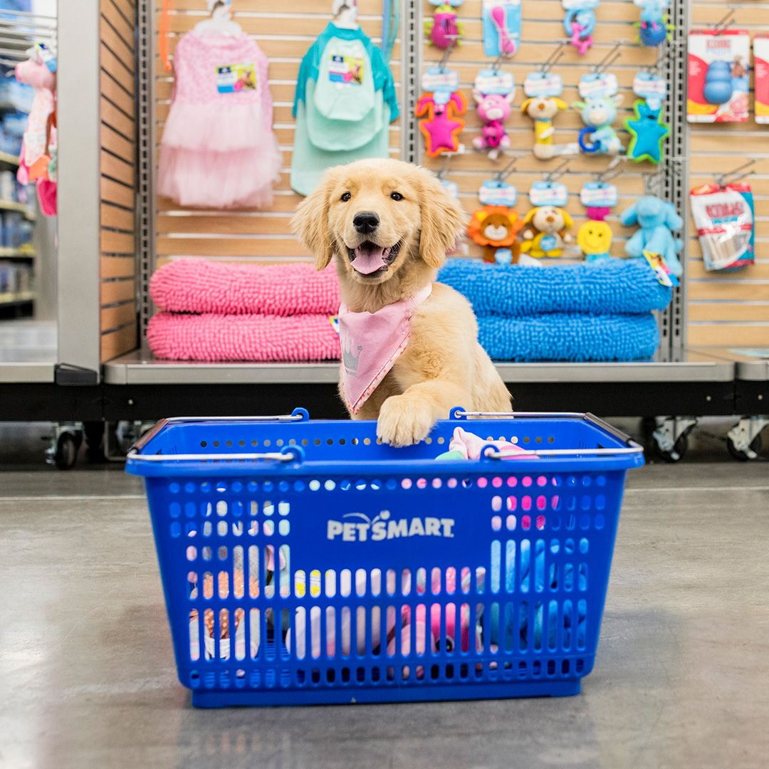 This Adorable Golden Retriever Pup Has Got The Right Idea She S Picking Up Her Puppy Essentials At Petsmart Your Puppy Place Petsmart Pets Puppies