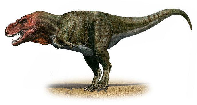 Тираннозавр | Динозавры, Игры динозавров, Доисторический