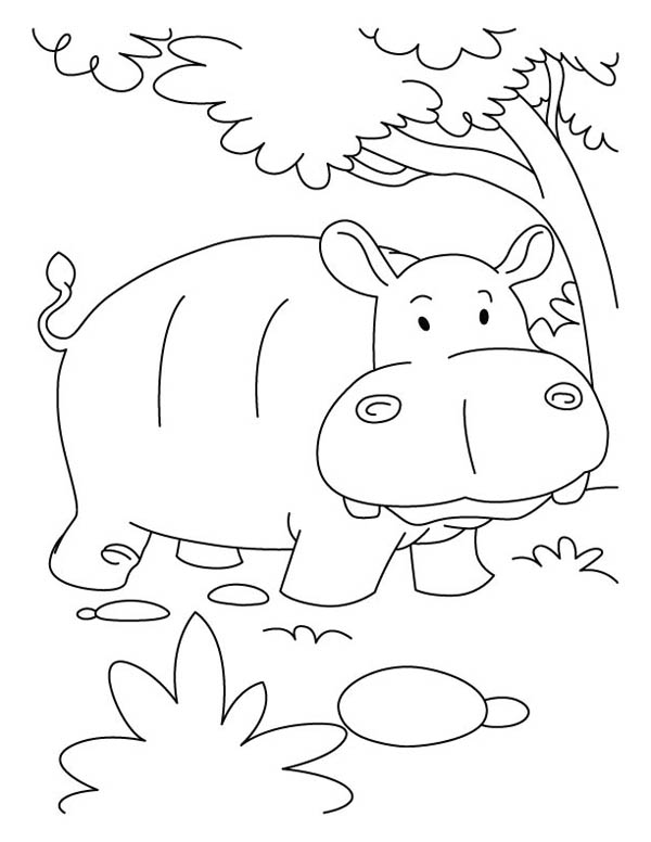 Pin By Nilma Soares On Kids Drawing In 2020 Coloring Pages Cute Coloring Pages Animal Coloring Pages