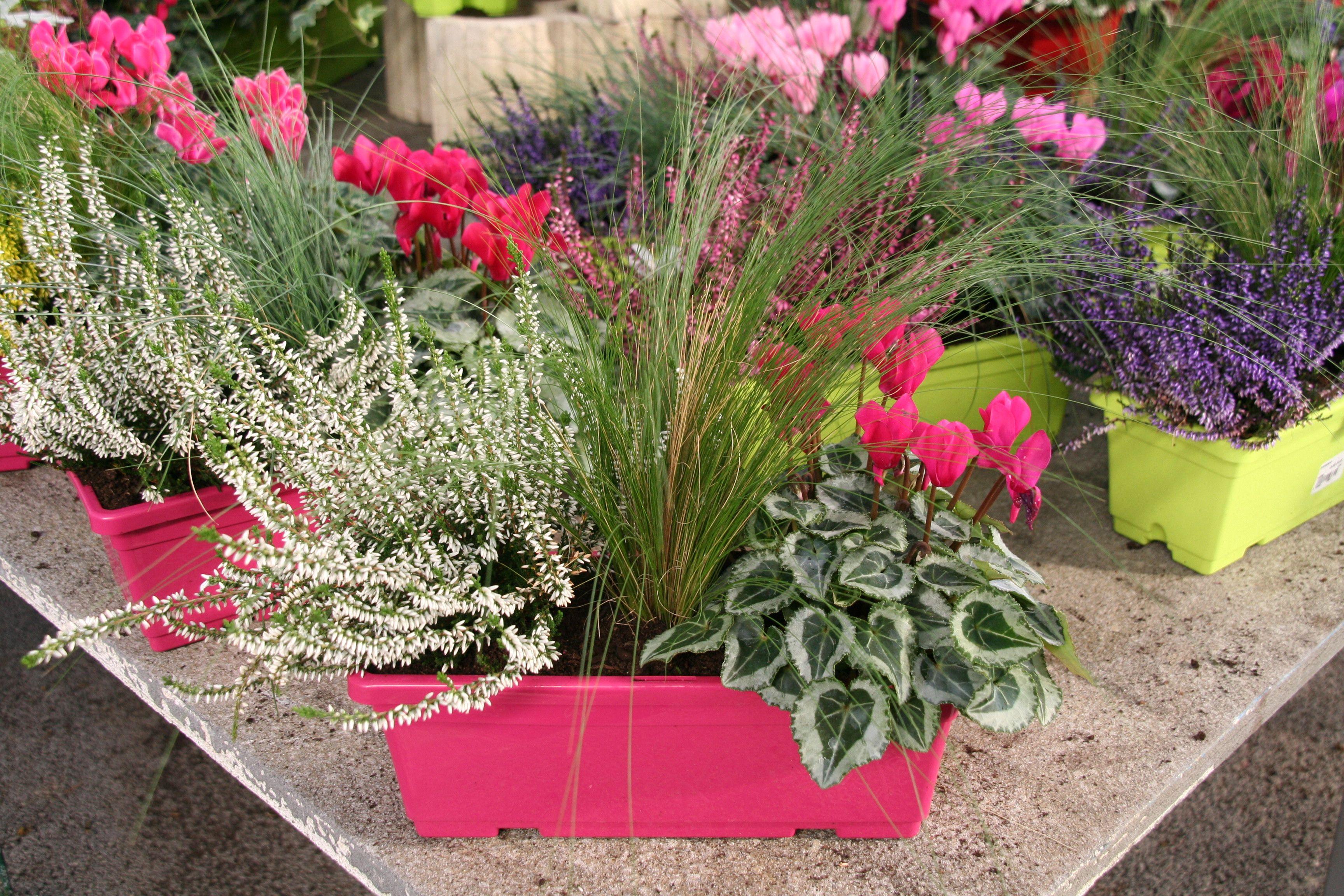 plante jardinière automne - Recherche Google