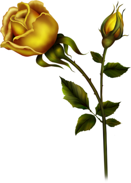 Yellow Rose With Bud Png Clipart Rose Bud Tattoo Yellow Roses Beautiful Rose Flowers