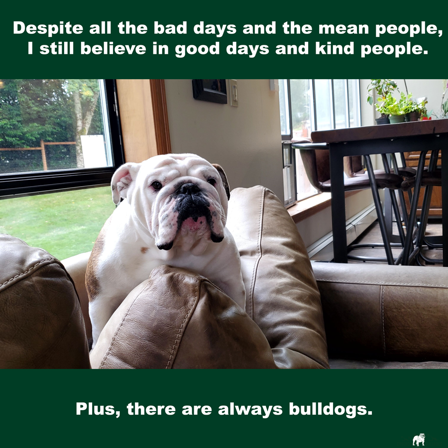 There Are Always Bulldogs Bulldog Quotes Bulldog Mean People