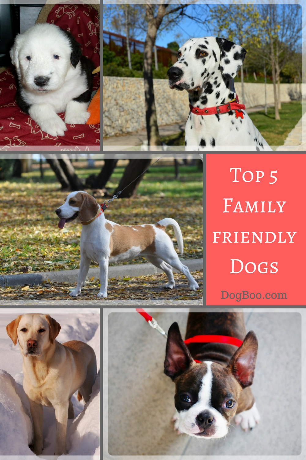 Top family pet dogs pinterest pet dogs dog and dog pin