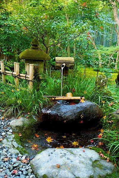 Gio-ji-Tempel Kyoto. das echte japan japan garten park japan landschaft japanisch öffentlichkeit reise tour erforschen blume pflanze baum teich see #japangarden