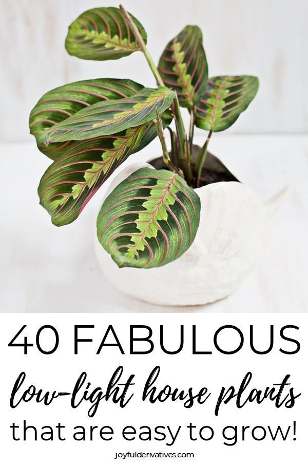 Find the perfect lowlight house plant for your home in this list of 40 plants that dont need sunlight to thrive Whether youre looking for an air purifier a hanging plant...