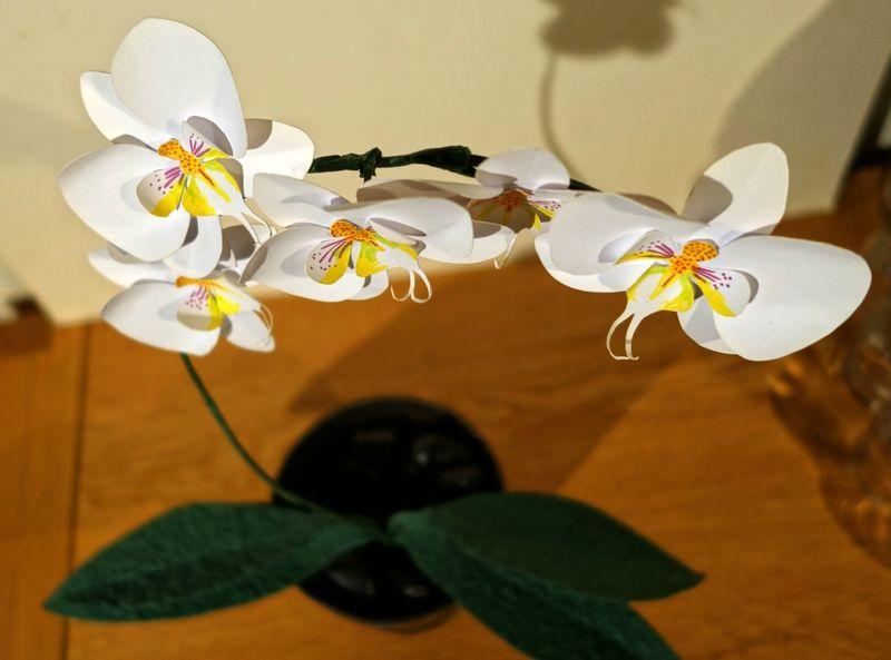 orchidée en papier/paper orchid