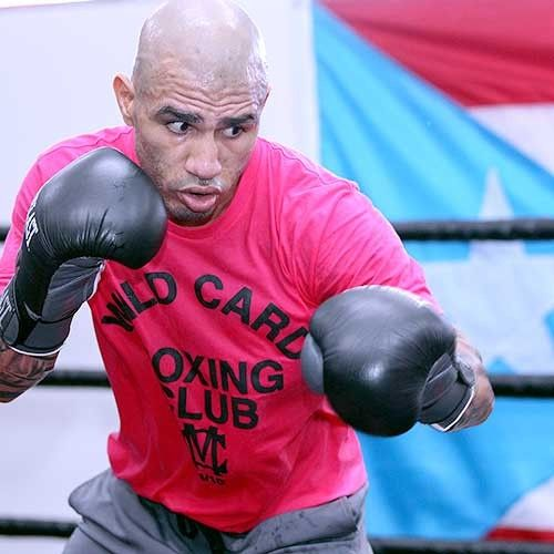 Miguel Cotto Wild Card Tee Pink Miguel Cotto Boxing Shirts Boxing Images