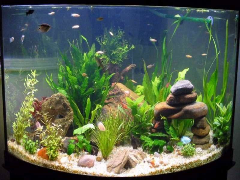How to decorate your boring fish tank fish tank for Small fish tank