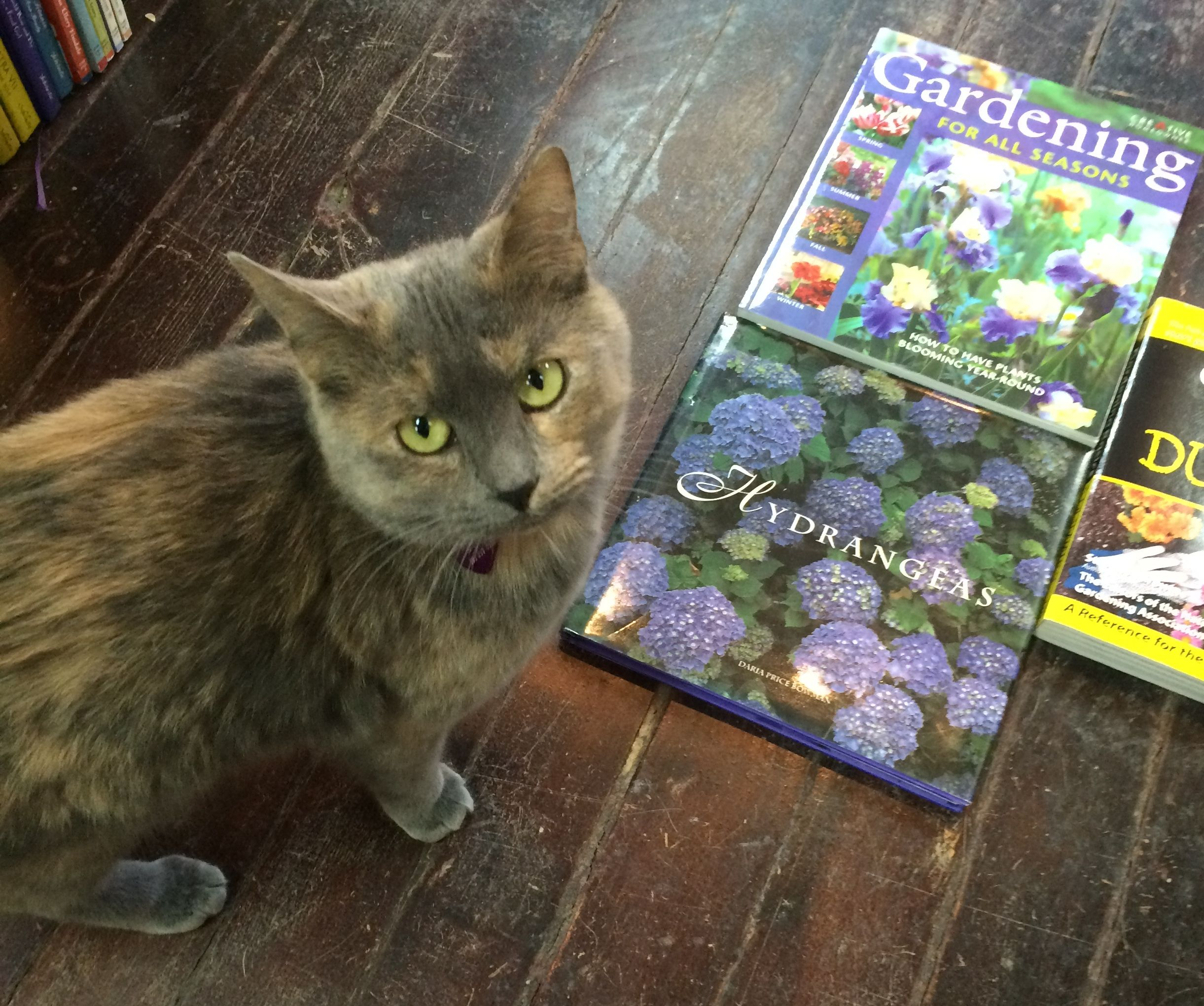 Daphne The Bookstore Cat Says It Is Time To Think Spring Bookstore Cats Cats Pets