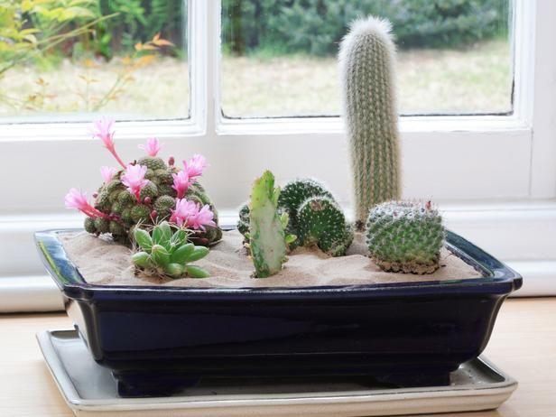 Indoor Desert Garden Gt Www Hgtv Gardening Create