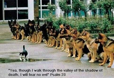 That's one brave mr. kitty;)
