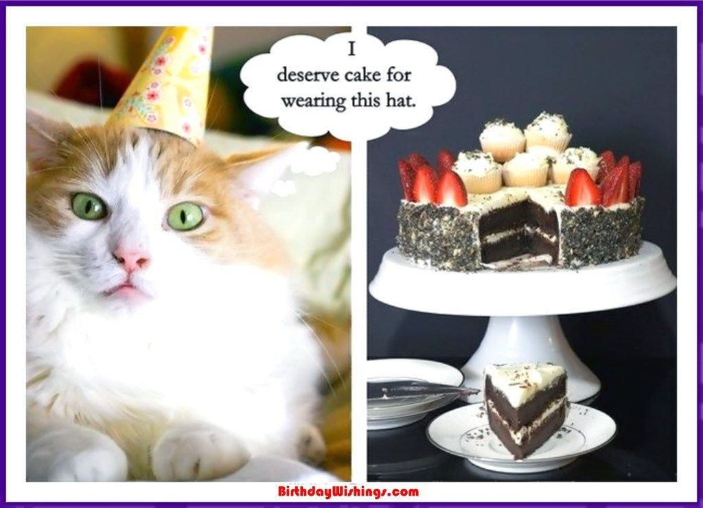 Funny Happy Birthday Memes With Cats Dogs Funny Animals