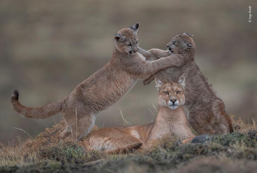 The 35 Best Wildlife Photos Of 2019 Wildlife Wildlife Photography Pet Portraits