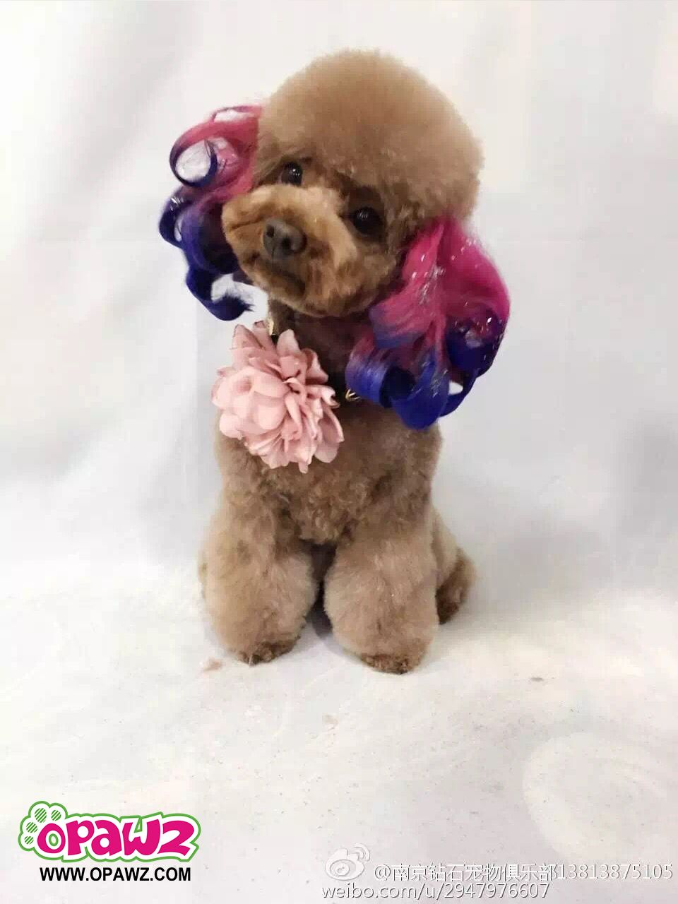 Opawz Pet Fashion Provides The Hottest Dog Accessories Including