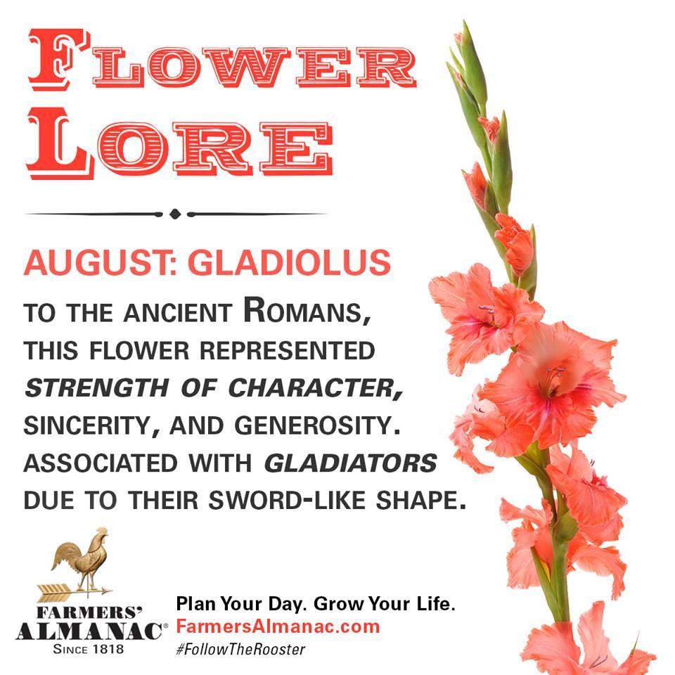 Flower Lore August Gladiolus Birth Month Flowers Gladiolus Flower Meaning Gladiolus