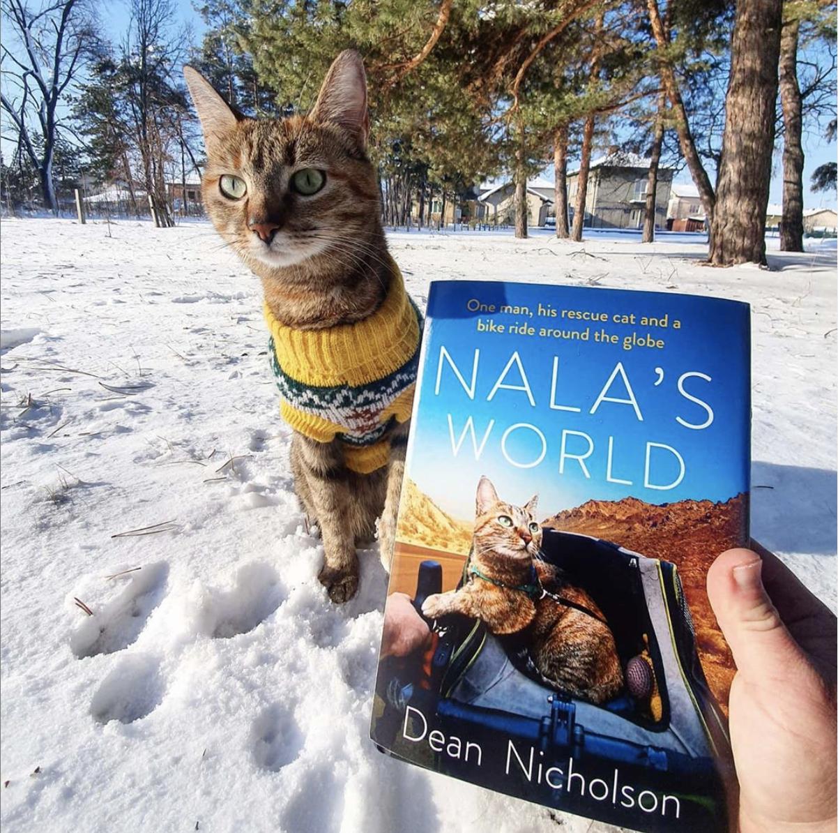 Nala S World By Dean Nicholson Janet Carr In 2020 World Cat Rescue Feline