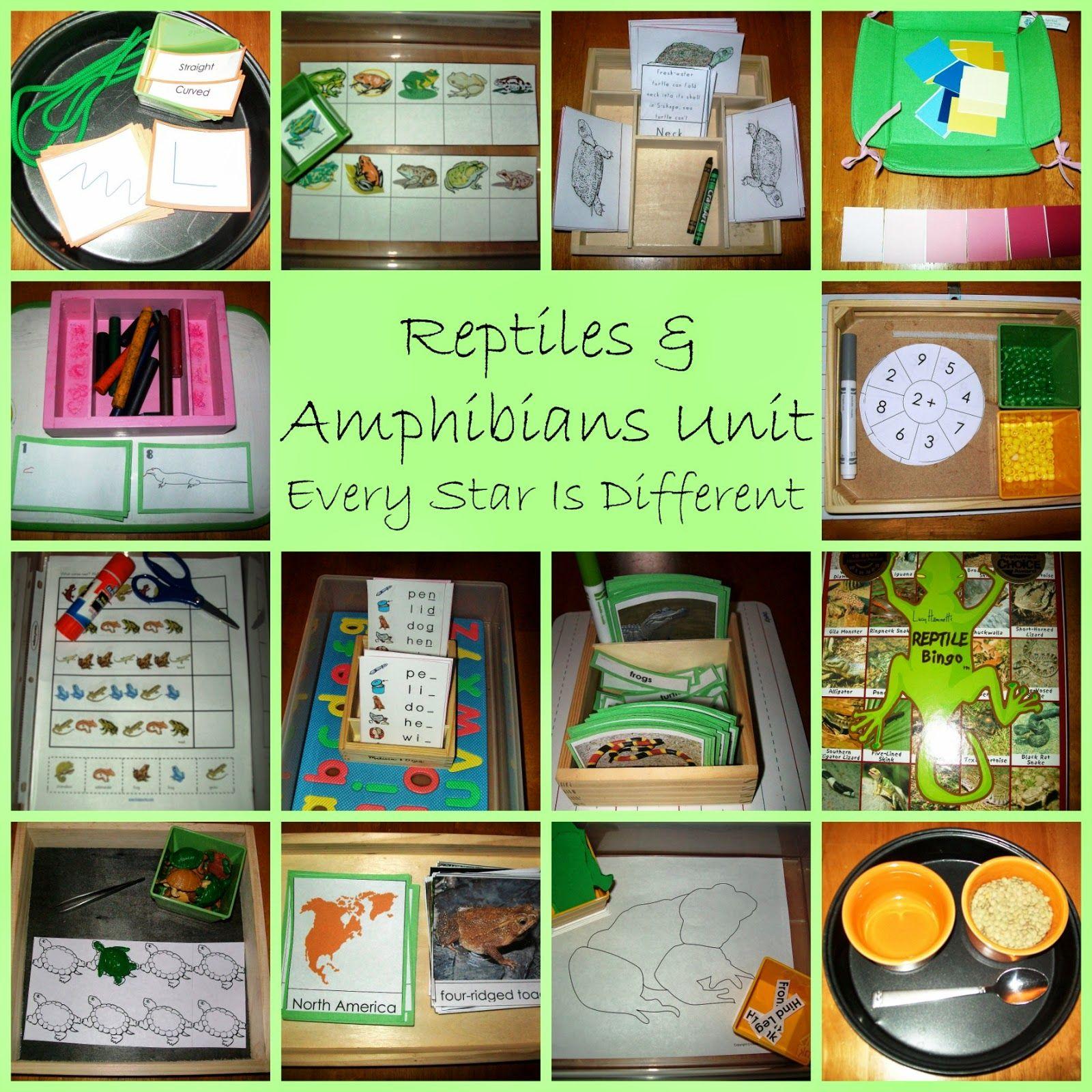 Montessori Inspired Amphibian Activities With Free