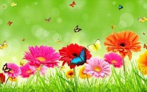 Bluehost Com Flower Wallpaper Hd Flower Wallpaper Flower Images Hd