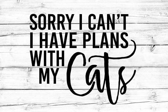Download Cat Lover Svg, Fur Mom Svg, Cat Mom SVG, Cat Svg, Sorry I ...