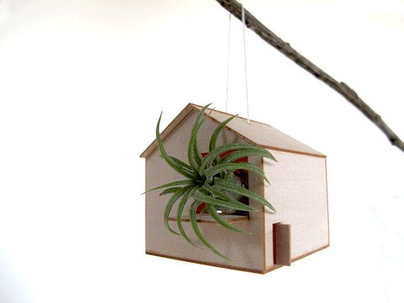 hanging barn with air plant by My House Party, Chicago