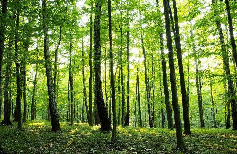 Wall Mural Photo Wallpapers For Living Or Bedroom Green Summer Forest Decor Different