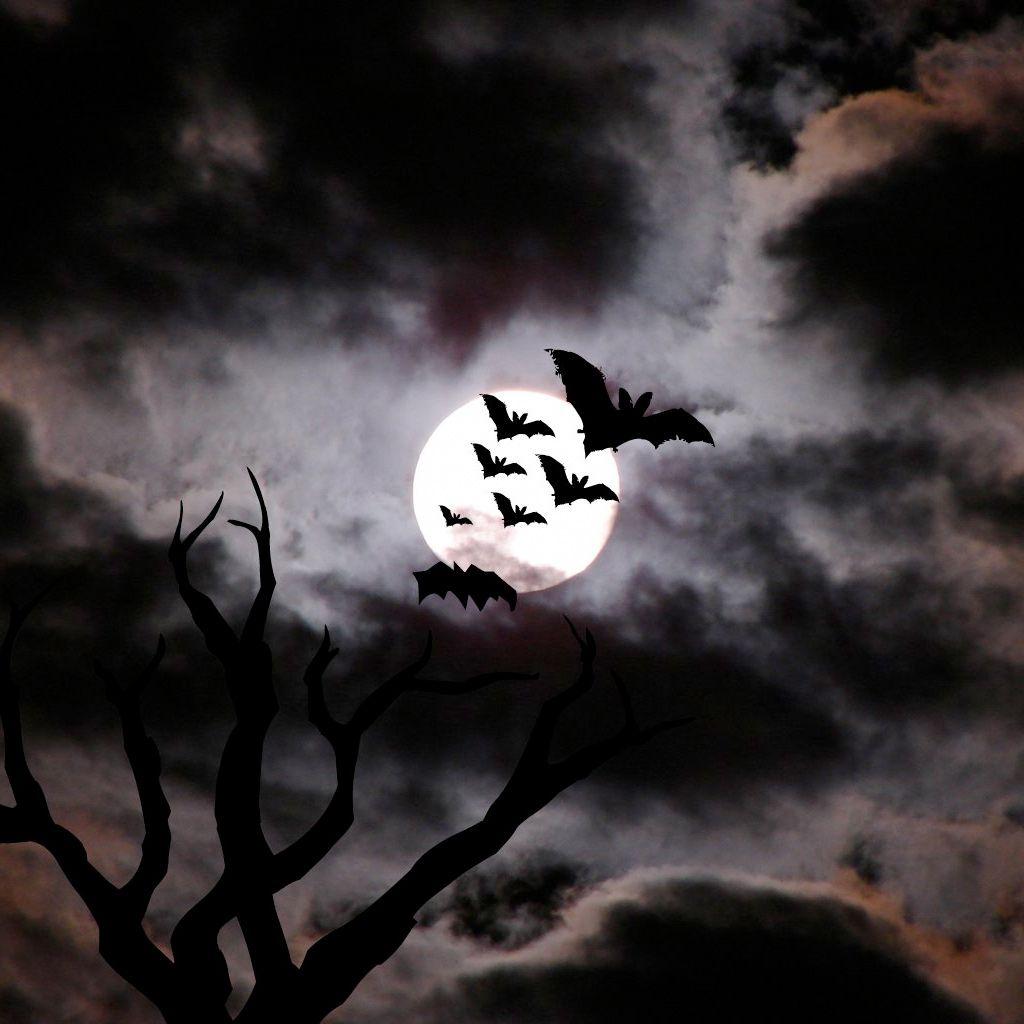 Great Wallpaper Halloween Ipad Mini - 2e8f1af336495a8fca14e2b7dfea66f0  You Should Have_917543.jpg