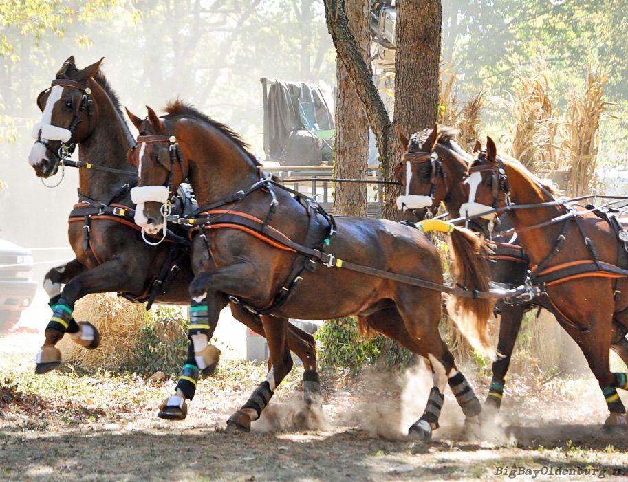 фотографии можно фото коней в упряжке девушка стала