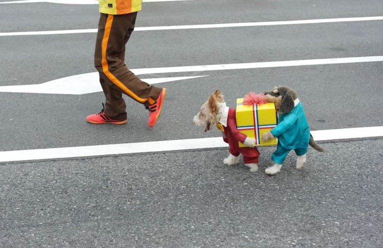 Dogs Carrying Present Dog Costume Yes That Is Actually Only One
