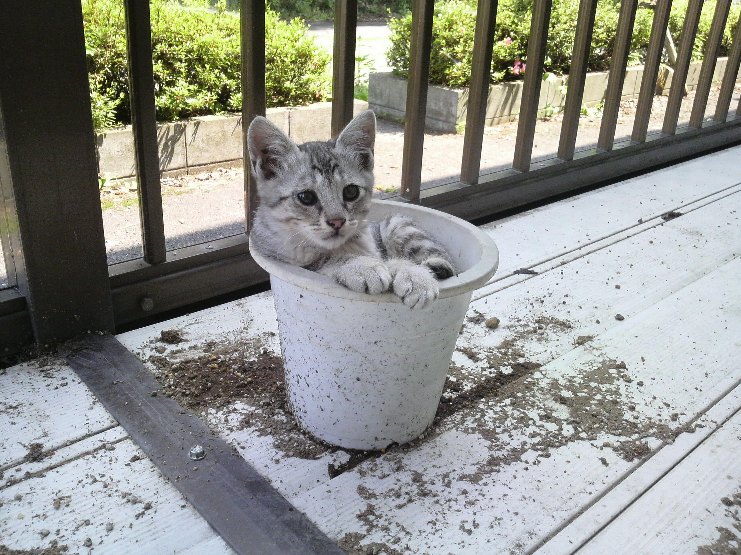 Cat in the flower pot.
