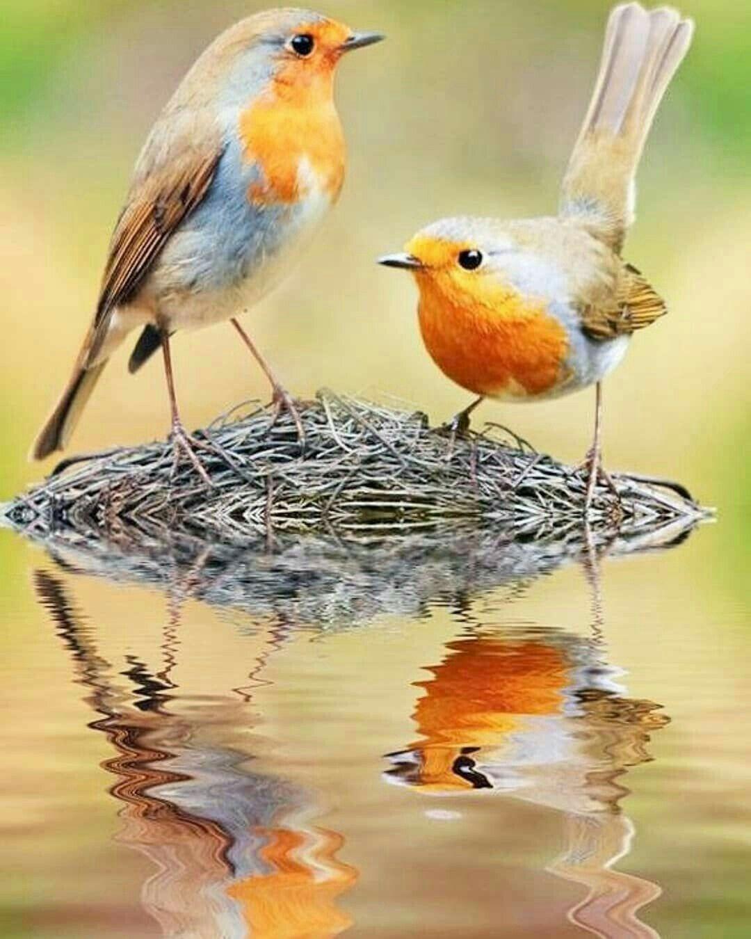 pin von 👑hamzakhanhk👑 auf bᴇᴀᴜᴛɪғᴜʟ bɪʀᴅs  vögel fotos
