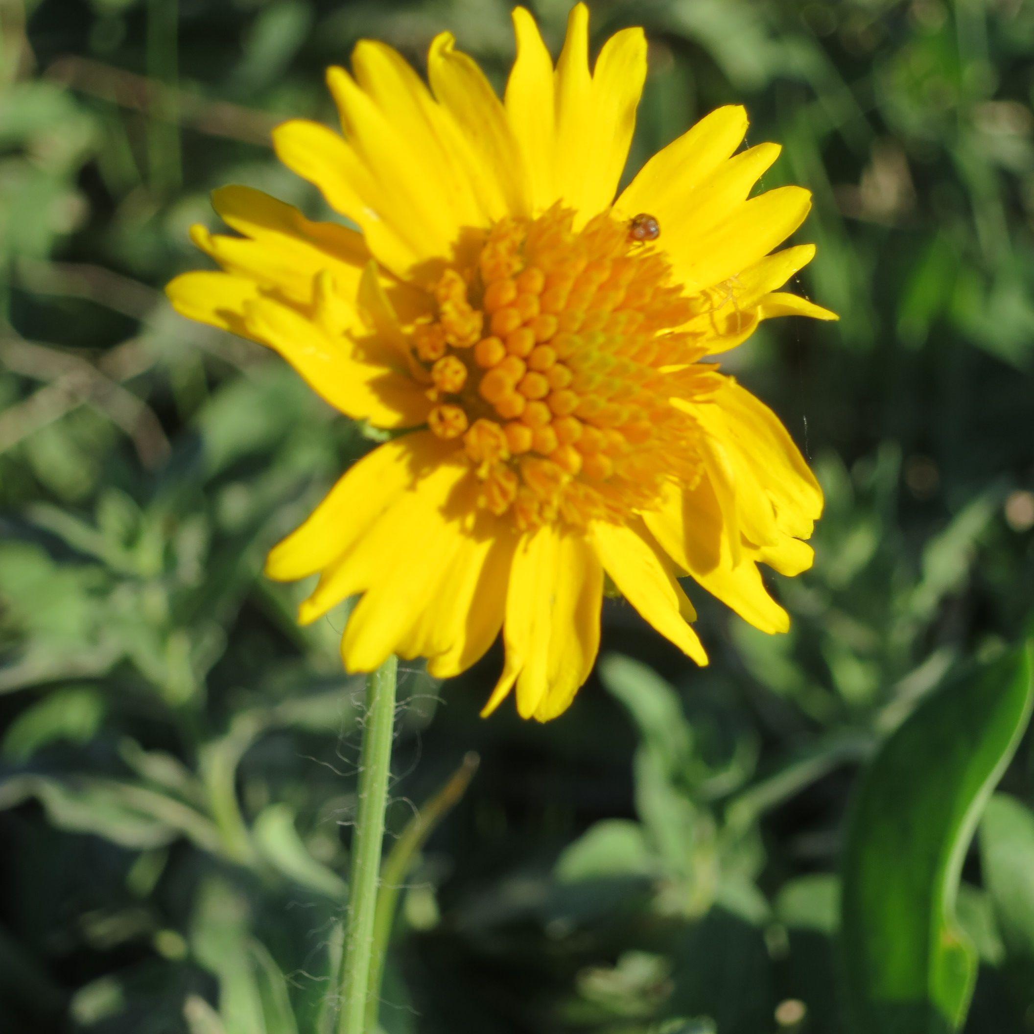 Texas wild flowers ruraltexasphotos Flower care, Wild