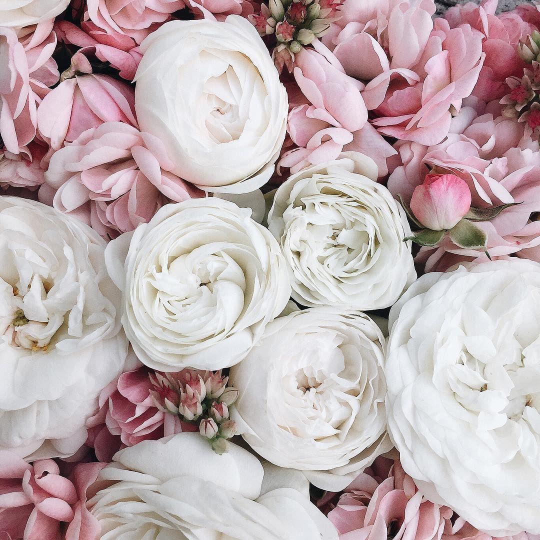 Цветы как основная тема для фотостоков