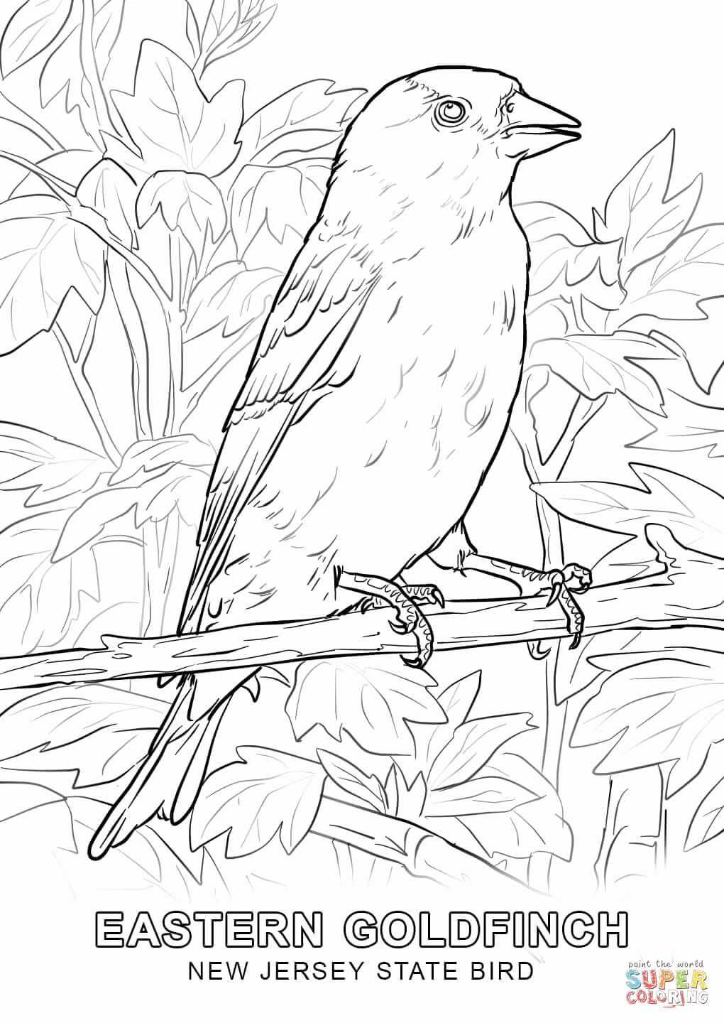 Arizona State Bird Coloring Page Fresh Lovely New Jersey State
