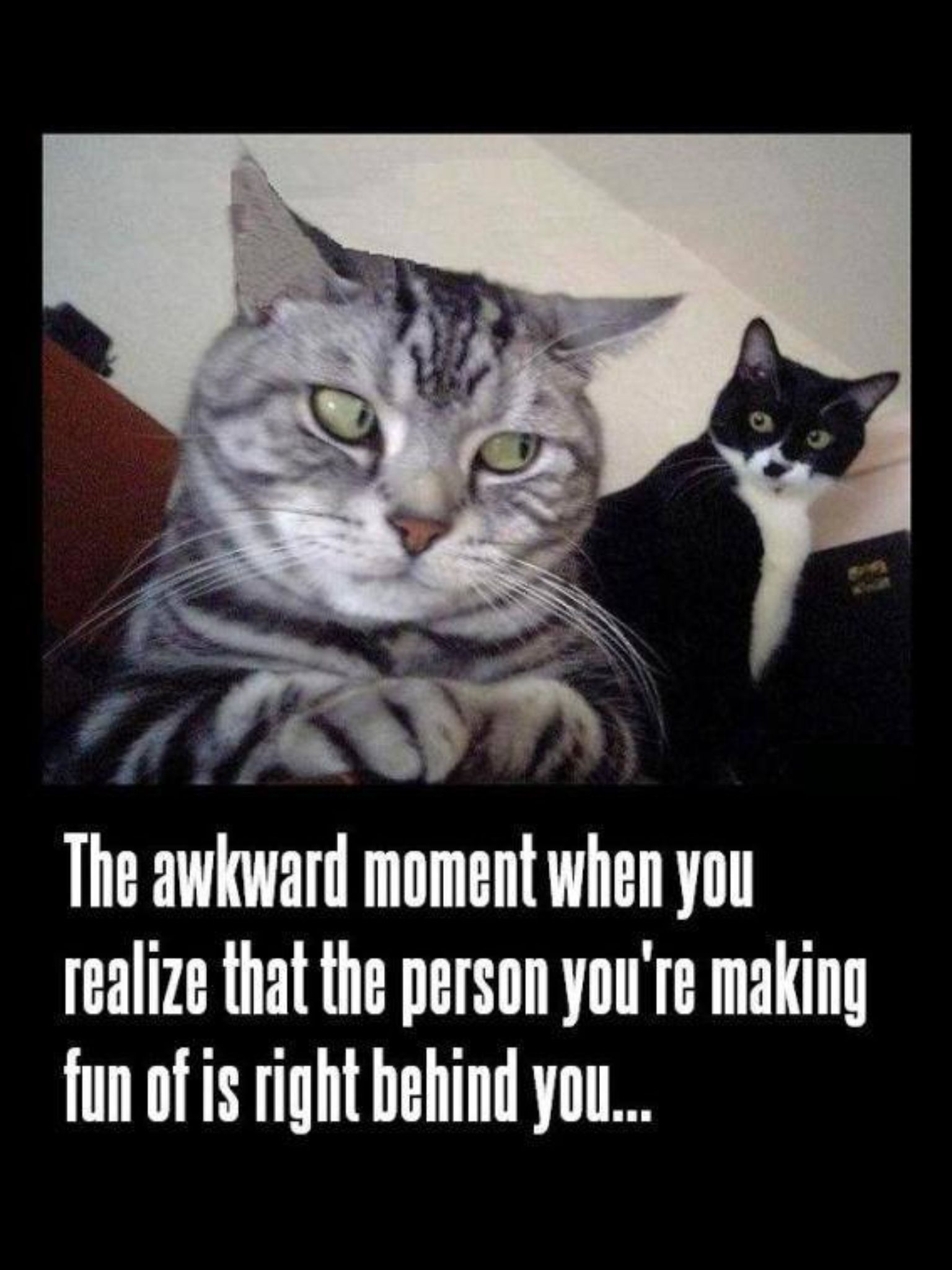 Pin by Nancy Ranieri on Quotes Funny cat memes, Funny
