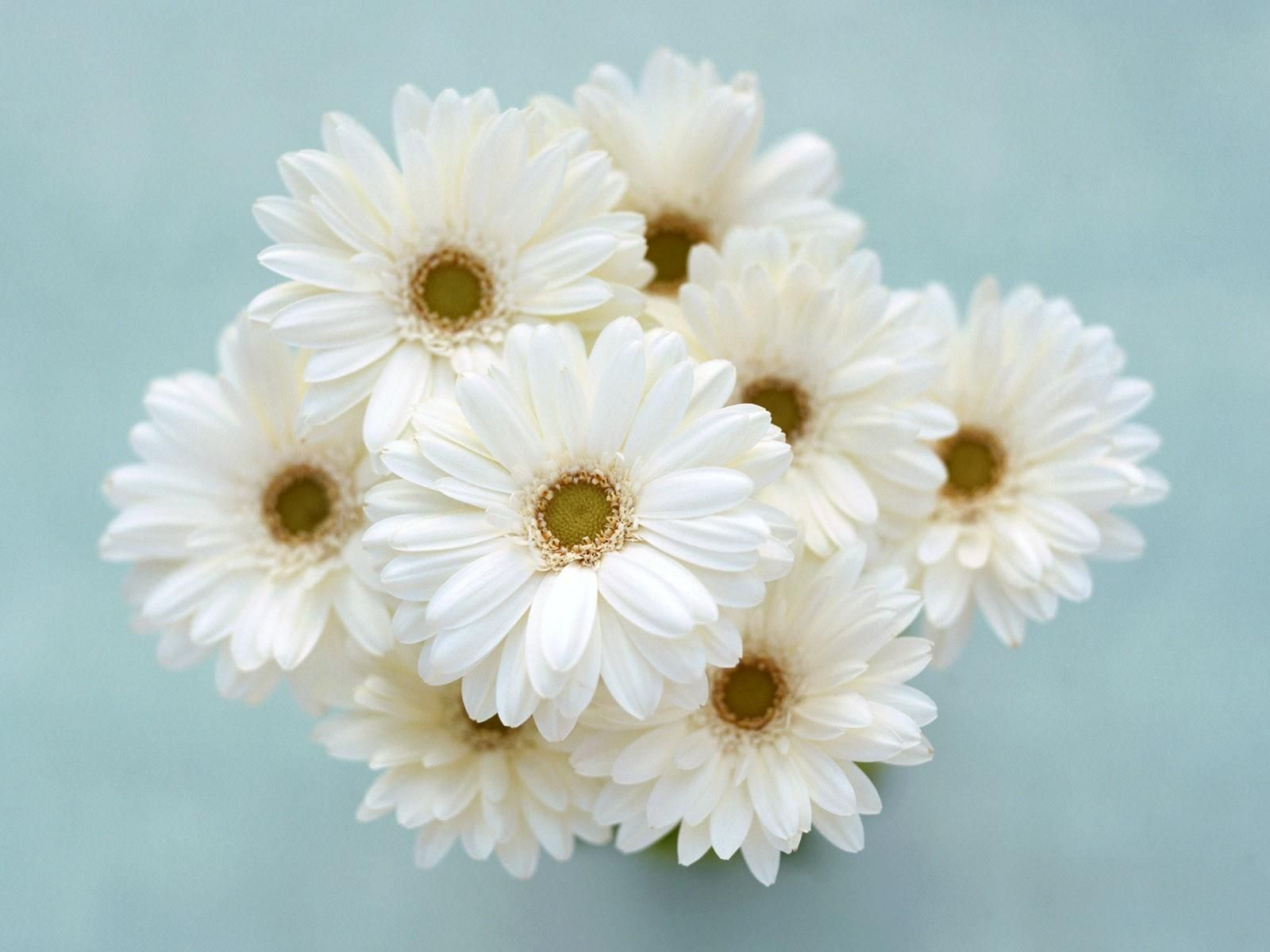 Images For White Flowers Bouquet White Flower Bouquet White Flowers Flowers