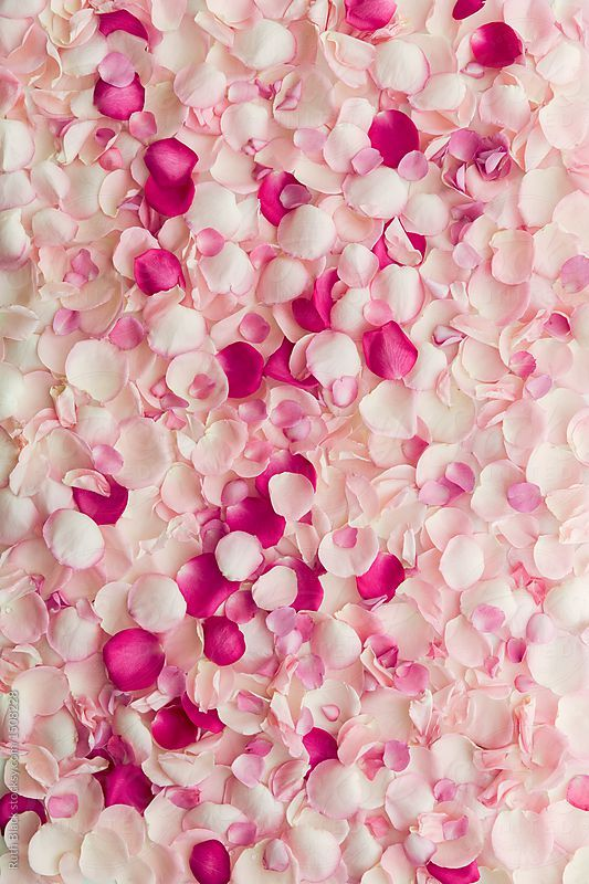 Rose Petal Background By Ruth Black Stocksy United In 2019