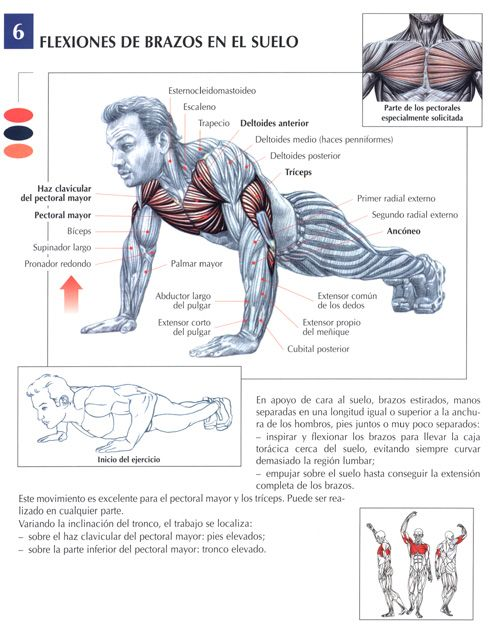 De pectoral y triceps ejercicios