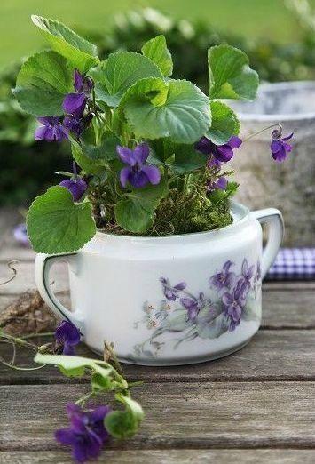 8 plantes mettre dans une chambre plantes d 39 int rieur jardin violet fleurs et fleurs violette - Plante a mettre dans une chambre ...