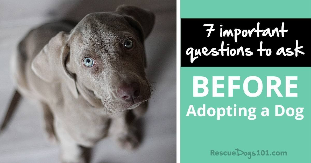 7 important questions to ask before adopting a puppy or