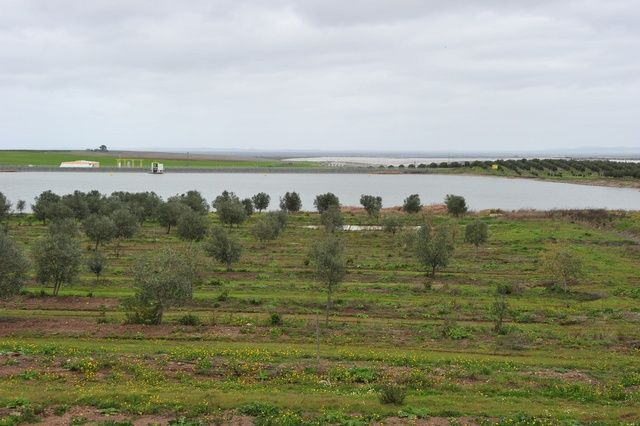 Mcdonalds cultiva cebolas no Alqueva